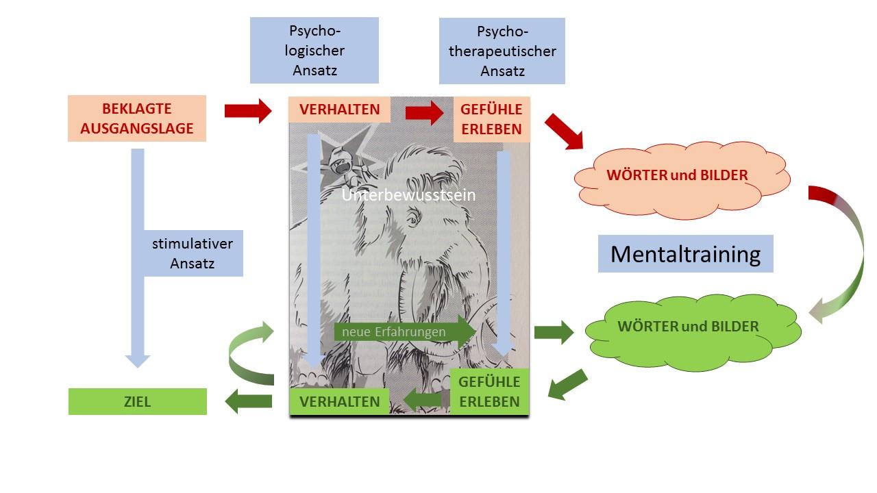 neuroplastizität des gehirns grundlagen